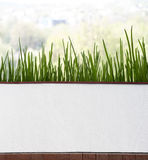 Ciboulette fraîche dans le pot près de la fenêtre Photo stock