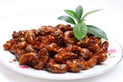 cicada που τηγανίζεται Στοκ Φωτογραφίες