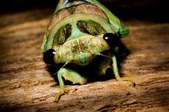 Cicada πυροβολισμός κουπών Στοκ φωτογραφία με δικαίωμα ελεύθερης χρήσης