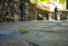 Cicada στο έδαφος που ψάχνει ένα άτομο Στοκ Εικόνα