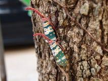 Cicada. 400-05235059, animal, antenna, background, black, bug, butterfly, celebration, cicada, city, close, color, dark, december, dusk, elegance, eye, fauna Stock Images