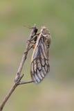 Cicada Stock Images