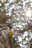 Cicada enclosures Stock Image