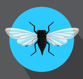 Cicada Flying Insect Royalty Free Stock Photography