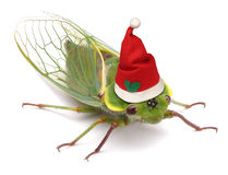 Cicada Funny Christmas Australia Royalty Free Stock Photos