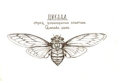 Cicada insect quesada gigas. Cicada insect black and white drawing top viev Stock Photography