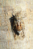 Cicada insect francais. Provence france sound Stock Image