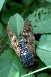Cicada, Kyoto, Japan Royalty Free Stock Photo