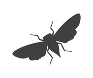 Cicada Moth Insect Silhouette Royalty Free Stock Photo