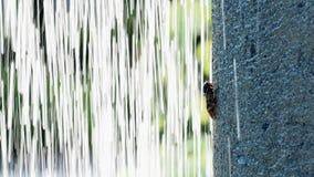 A cicada on a pillar behind waterfall