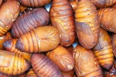 Cicada pupa. The close-up of cicada pupa Stock Photos