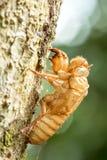 The Cicada's Remains Stock Photos