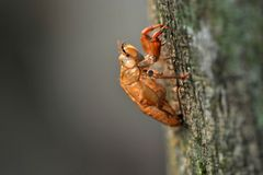 Cicada shell. On the tree with backlight royalty free stock photography