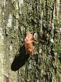 The cicada shell Stock Photos