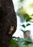 Cicada slough στο δέντρο Στοκ φωτογραφία με δικαίωμα ελεύθερης χρήσης