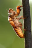 Cicada slough stock photos