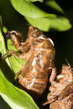 Cicada Slough Stock Photo