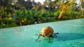 Cicada in summer Stock Photo