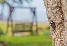 Cicada on tree bark day time. Image of cicada on tree bark day time Stock Photo