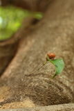 Cicada on the tree in the nature. Cicada on the tree in the nature Stock Images