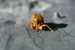 Cicada on Tree Stock Photos