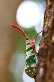 Cicada trunk. Stock Photo