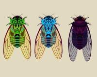 Cicadas μέρος 1 συλλογής Στοκ Εικόνες