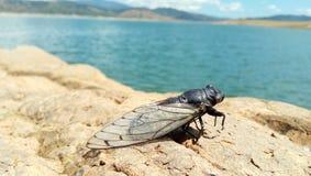 cicade royalty-vrije stock afbeelding