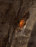 Cicade royalty-vrije stock afbeeldingen