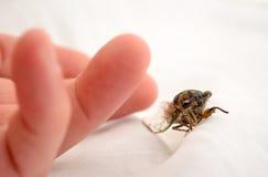 Cicade naast vinger Stock Fotografie