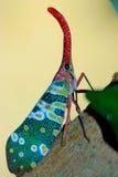 Cicade Turkije Stock Foto's
