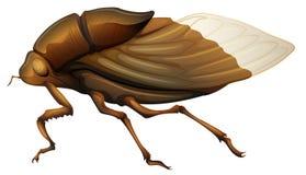 Cicadidae Zdjęcia Royalty Free