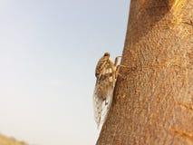 Cicadomorpha Royalty-vrije Stock Fotografie