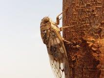 Cicadomorpha Stock Fotografie