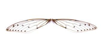 Cicala dell'insetto Immagini Stock Libere da Diritti