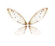 Cicala dell'insetto isolata su fondo bianco Fotografia Stock