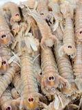 Cicale di mare - kleine europäische Heuschreckenhummer Lizenzfreie Stockfotos