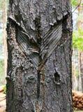 Cicatrices en un árbol fotos de archivo
