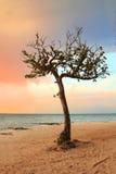 cicho drzewny tropikalnym raju Zdjęcie Royalty Free