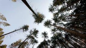 Cichy lasowy ol?niewaj?cy s?o?ce zdjęcie wideo