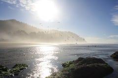 Ciclón de la gaviota Fotos de archivo