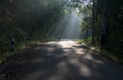 Ciclagem na luz solar Foto de Stock