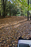 Ciclagem nas madeiras Imagem de Stock Royalty Free