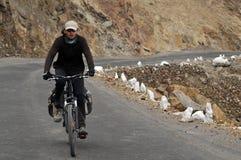 Ciclagem nos Himalayas Fotografia de Stock Royalty Free