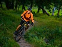 Ciclista che guida la bici nella bella foresta di estate Immagini Stock