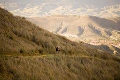 Ciclista de la montaña Imagen de archivo libre de regalías