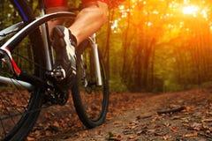 Ciclista del primo piano con la sua bicicletta nella foresta di estate Fotografie Stock