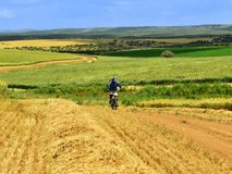 Ciclista em campos de grão Foto de Stock