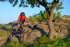 Ciclista en la bici de montaña roja de la chaqueta y del montar a caballo del casco abajo Rocky Hill cerca del árbol verde hermos Foto de archivo libre de regalías