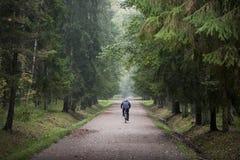 Ciclista en una bici en bosque Imagen de archivo libre de regalías